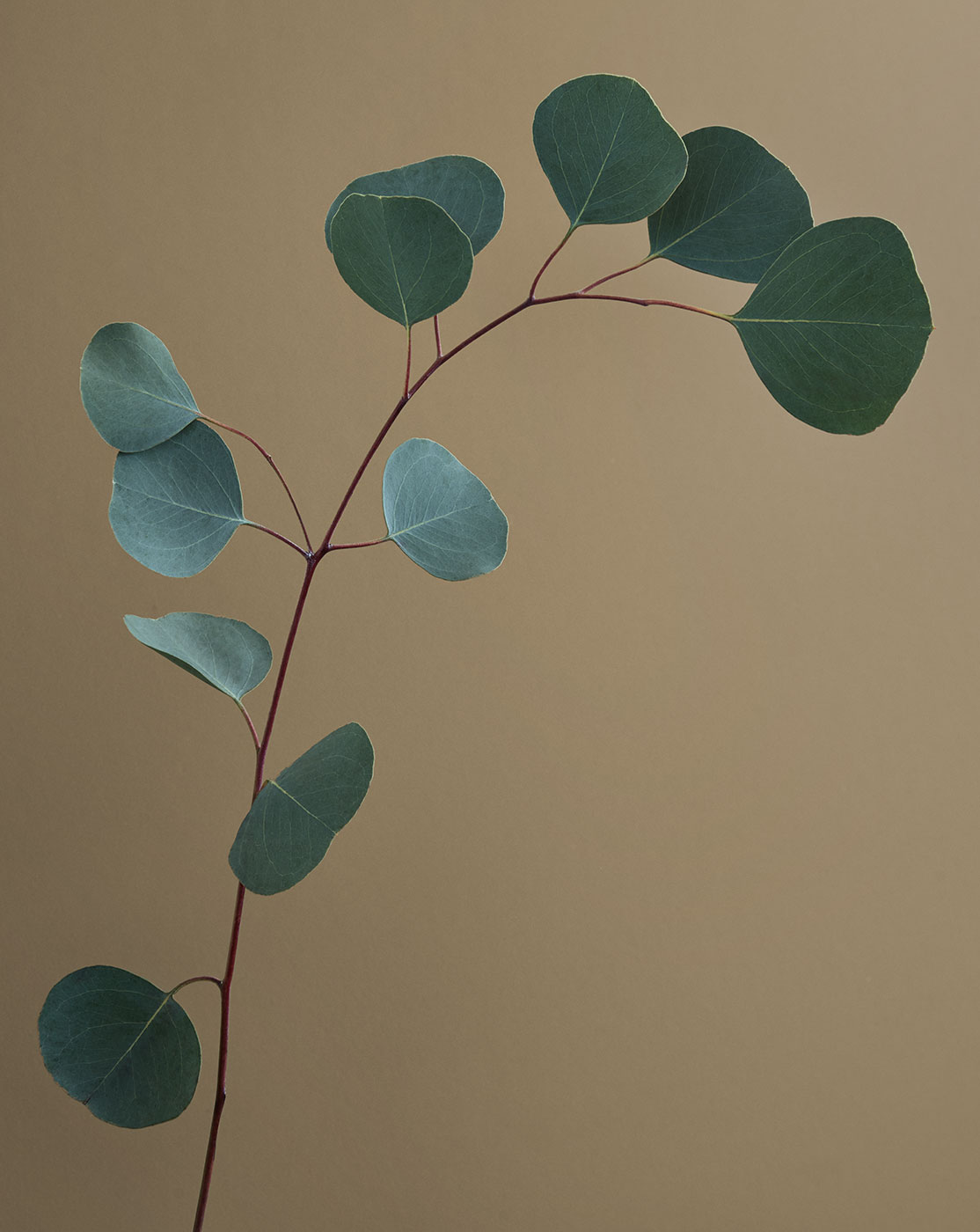 FELT_INGREDIENTS_EUCALYPTUS