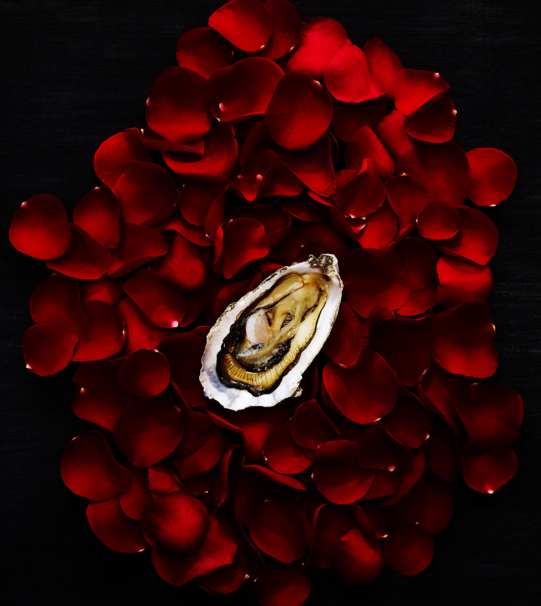 More_OysterRoses_W_APF.jpg